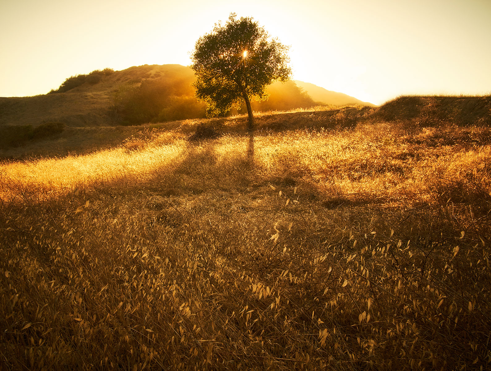 07-TRAVELOGRAPHY-TOPANGA-STATE-PARK-0061